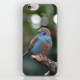 Red cheeked finch iPhone Skin
