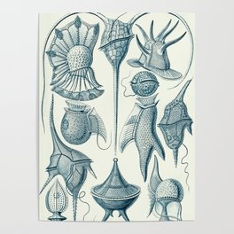 Ernst Haeckel Peridinea Plankton Poster