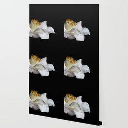 Beloved Wallpaper