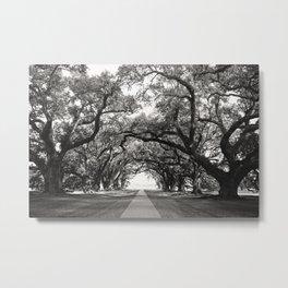Oak Allee Metal Print
