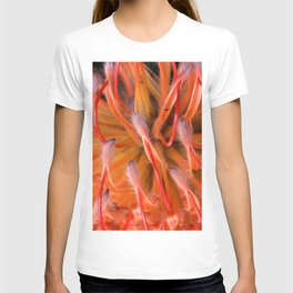 The Visitor on Red Protea T-shirt
