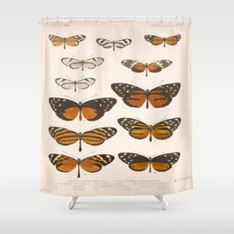 Vintage Scientific Anatomical Insect Butterfly Illustration Vintage Hand Drawn Art Shower Curtain