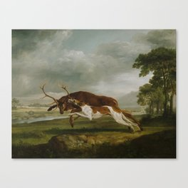 George Stubbs  -  Hound Coursing A Stag Canvas Print