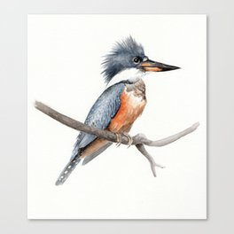 Kingfisher Bird Watercolor Illustration Canvas Print