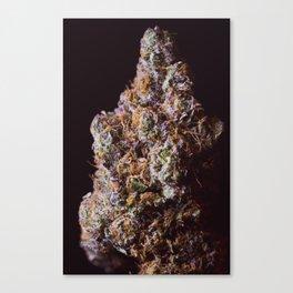 Cherrygasm Canvas Print
