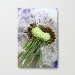 Dandelion Grape hyacinths 1 Metal Print