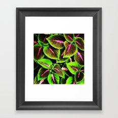 Coleus Framed Art Print