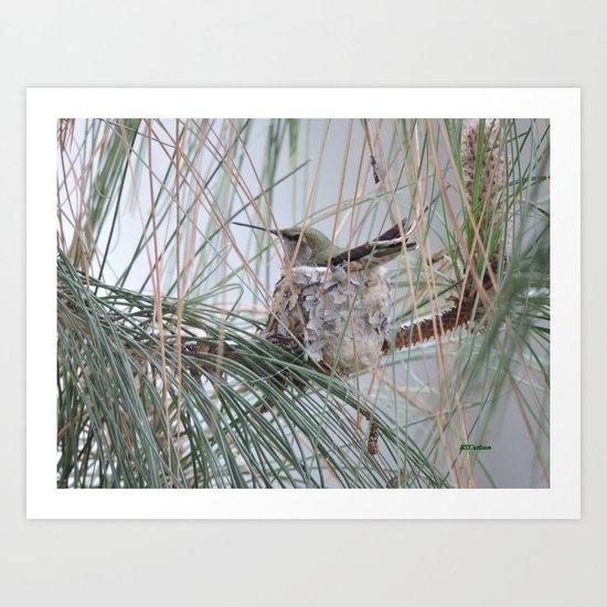 Pine Veil Nesting Art Print