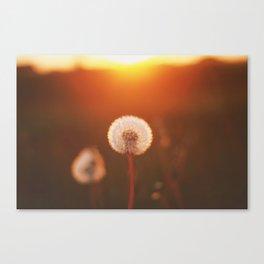 SUNSET DANDELION Canvas Print