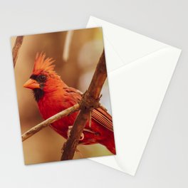 Male Northern Cardinal Stationery Cards