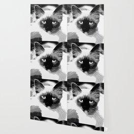 holy birma cat blue eyes vector art black white Wallpaper