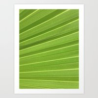 Palm detail Art Print