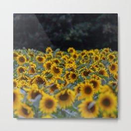 Summer orange yellow green black sunflowers Metal Print