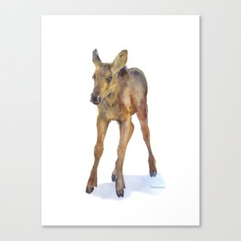 Moose Calf Watercolor Painting Canvas Print