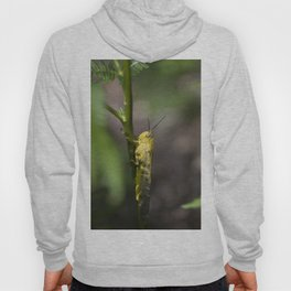 Yellow grasshopper Hoody