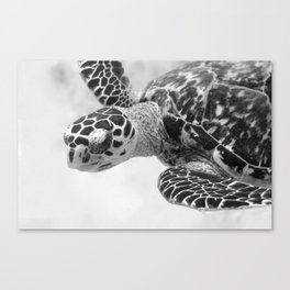 Hawksbill black and white Canvas Print