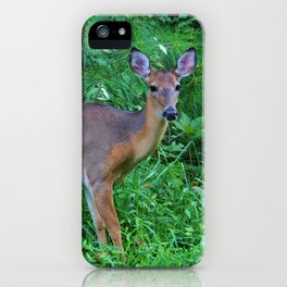 Deer By The Road iPhone Case