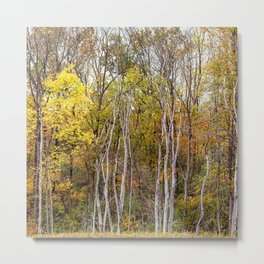autumn trees in a marsh Metal Print