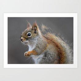Beautiful Red Squirrel Portrait Art Print