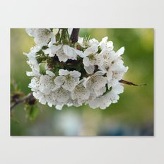 Cluster Fuhlowers. Canvas Print