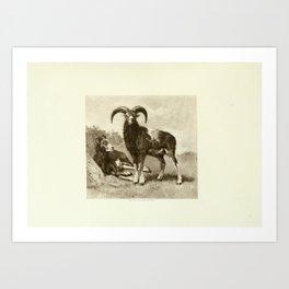 Rosa Bonheur - Atelier (1900) - Wild Sheep in the Mountains Art Print