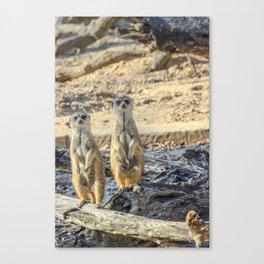 A couple of meerkats Canvas Print