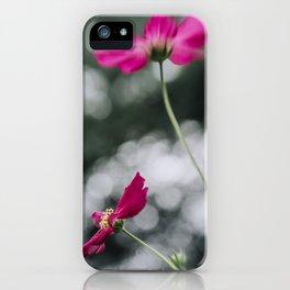 Cosmos flower III iPhone Case