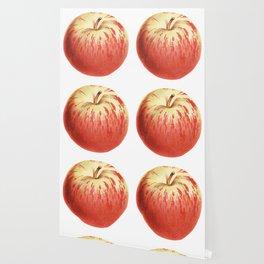Apple Illustration Drawing Wallpaper