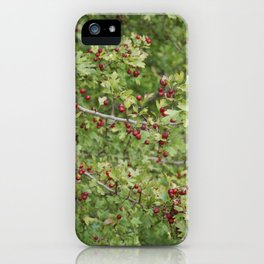 Hawthorn B iPhone Case