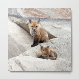Watercolor Fox, Red Fox 39, Union Reservoir, Boulder County Metal Print