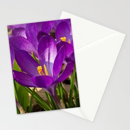 purple crocuses Stationery Cards