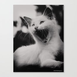 Angry Sebastian Canvas Print