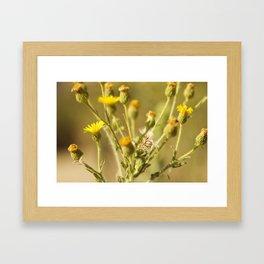 Yellows&Oranges Framed Art Print