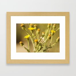 Yellows&Oranges Framed Art Print
