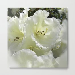white rhododendron III Metal Print