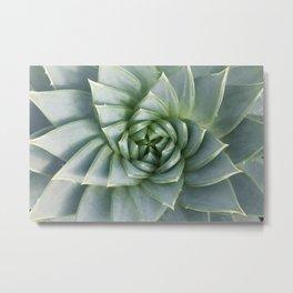 Succulent Spiral Metal Print