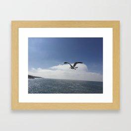 Flying Free Framed Art Print