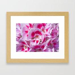 Red And White Flora Framed Art Print