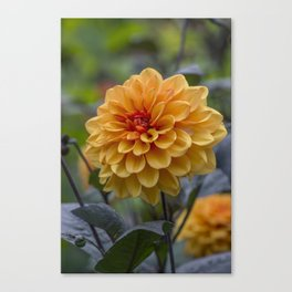 Forever Lasting Canvas Print