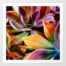 Spectacular Succulents Art Print