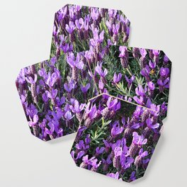 SPANISH LAVENDER AND ONE BEE Coaster