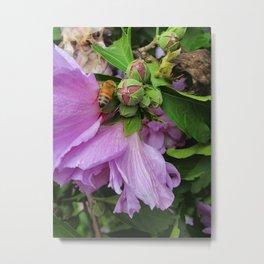 Golden Bee And The Purple Flower Metal Print