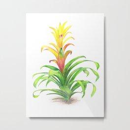 Bromeliad - Tropical plant Metal Print