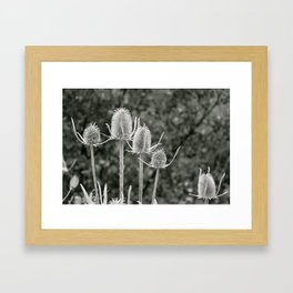 Delicately Rough  Framed Art Print