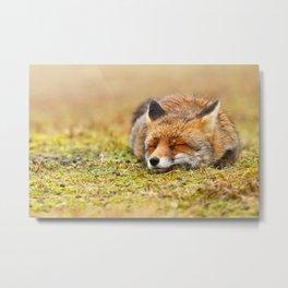 Comfortably Fox (red fox sleeping) Metal Print