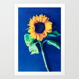 A decorative sunflower on the blue background Art Print