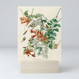 Ruby throated Humming Bird - Audubon's Print Mini Art Print
