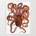 Octopus by haeckel