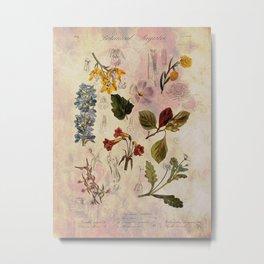 Botanical Study #1, Vintage Botanical Illustration Collage Metal Print