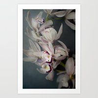 orchid Art Prints featuring Orchid by Pure Nature Photos